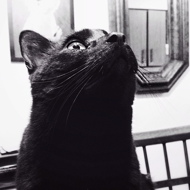 A photo of my cat, Bez, look up.