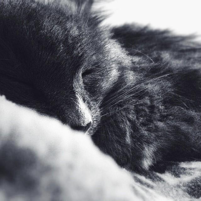 A sleeping grey cat.