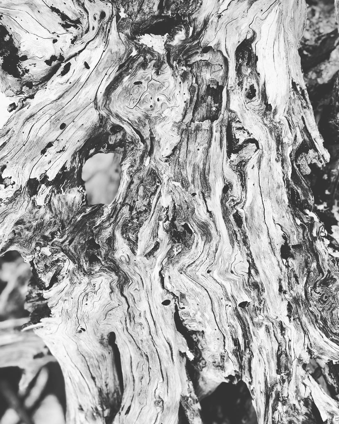 A black and white closeup of driftwood.
