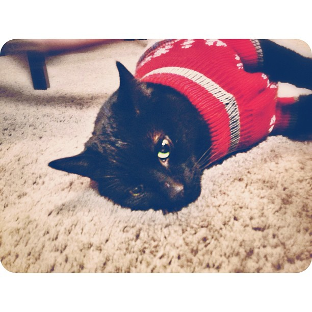 A cat in a red Christmas sweater laying on a carpeted floor.